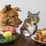 Proper Storage and Safety Tips for Pet Food