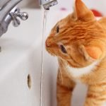 Cat Behavior – What Your Cat Wants You To Understand