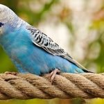 Parakeet Care 101 – Fun Facts About These Adorable Birds!