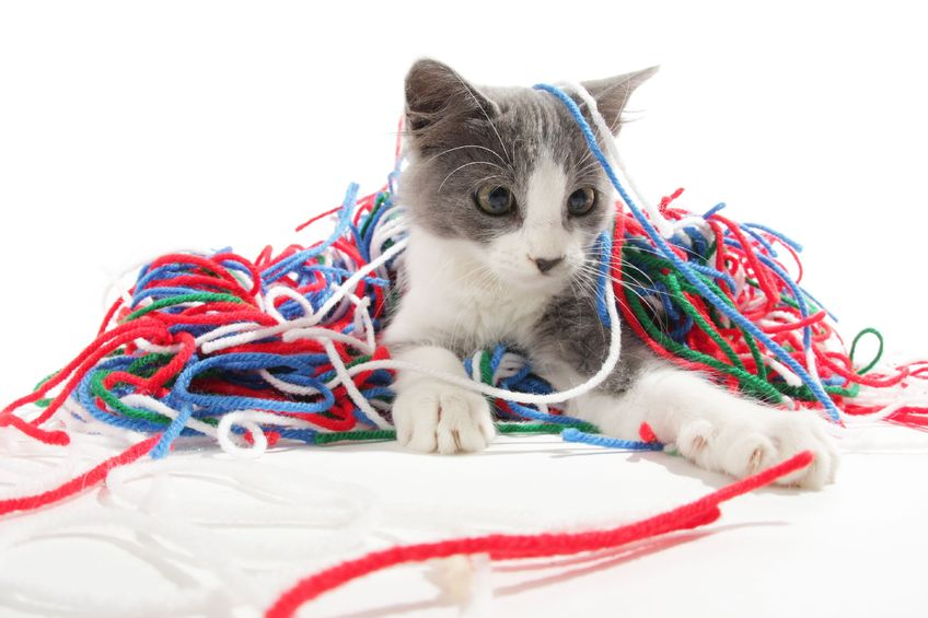 Household Items That Make Fun Cat Toys