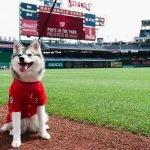 Pups in the Park Presented by Budweiser