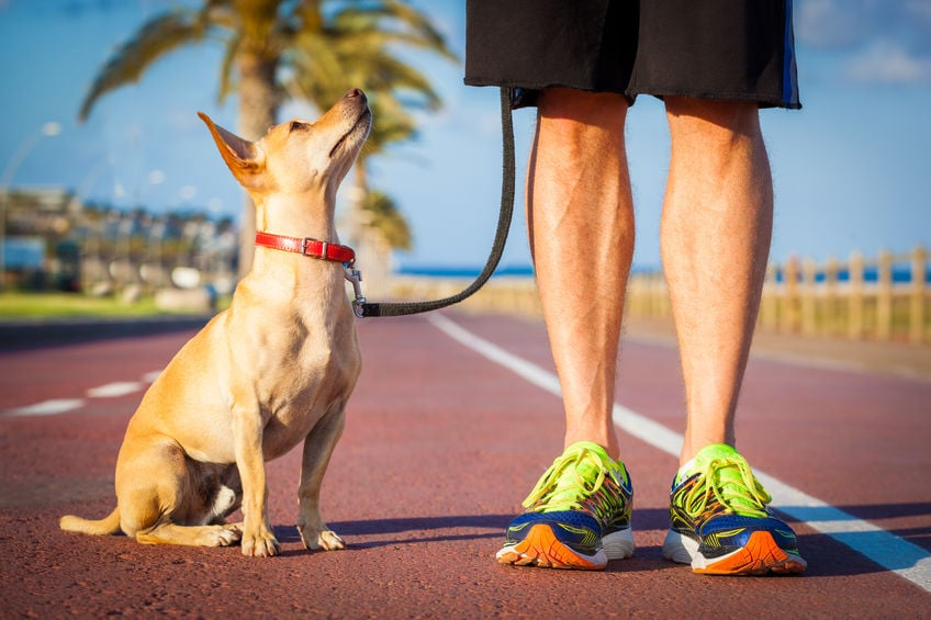 Proofing Your Dog Training