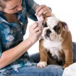Identify & Prevent Ear Infections in Dogs
