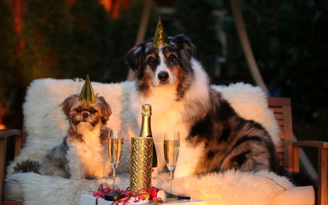 Dogs Celebrating with Champagne