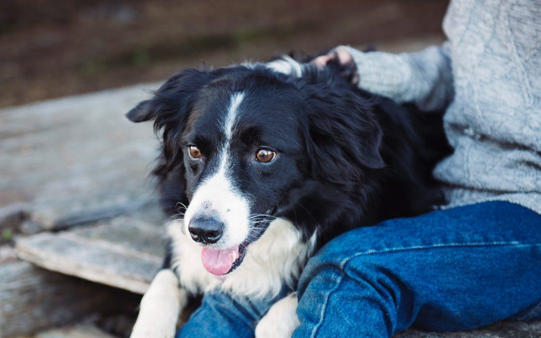 The First-Time Pet Owner's Guide to Finding the Perfect Companion and Welcoming Them Home