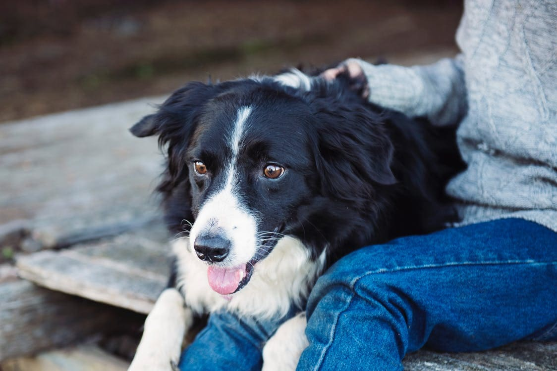 Rescue dog with new owner