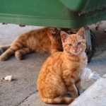 Stray cats or street cats near garbage container