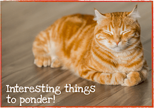 Thanksgiving Tips for Pet Owners