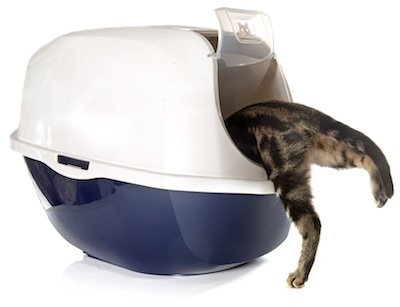Closed cat litter box