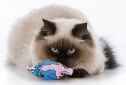 Catnip Benefits for Cats
