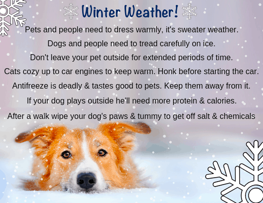 winter weather care for dogs