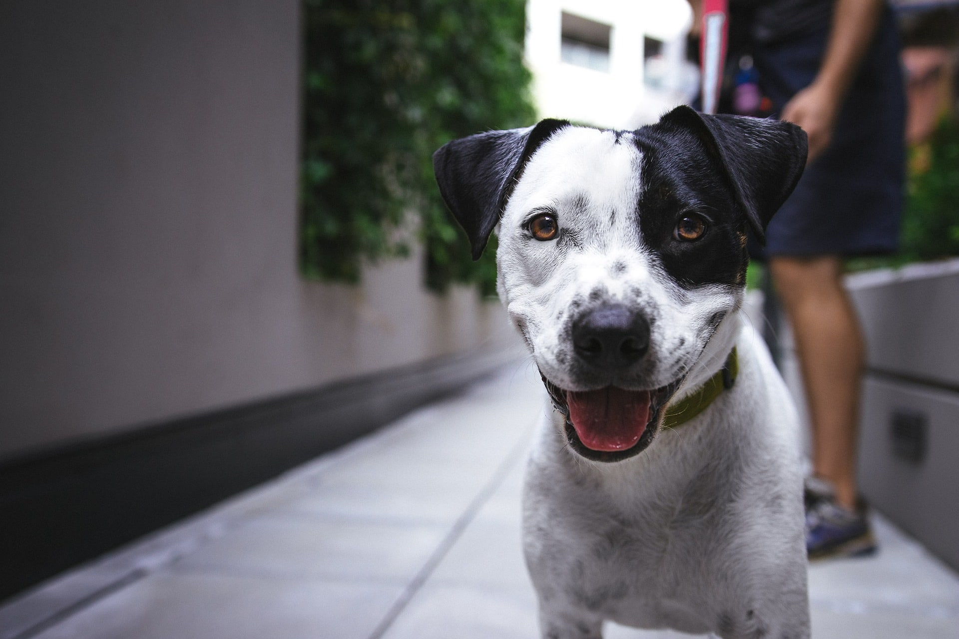 10 of the Best Washington D.C. Apartments for Pet Owners