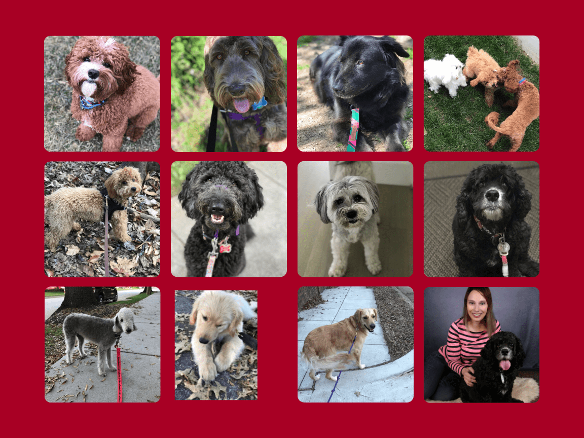 Dogs Collage 3