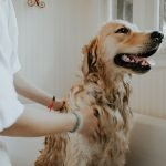 Can My Pet Make My Family or Me Sick?